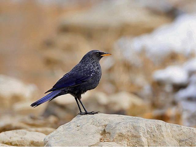 descriptive essay whistling of birds